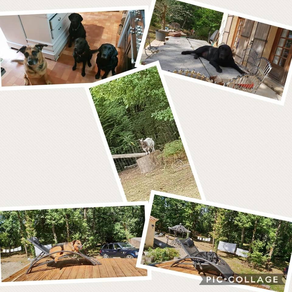 Collage of animal antics