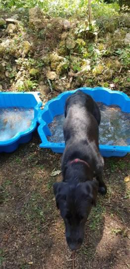 Lillie paddling pool