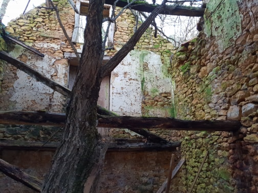 tree through ruin roof