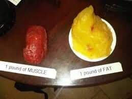 A pound of fat