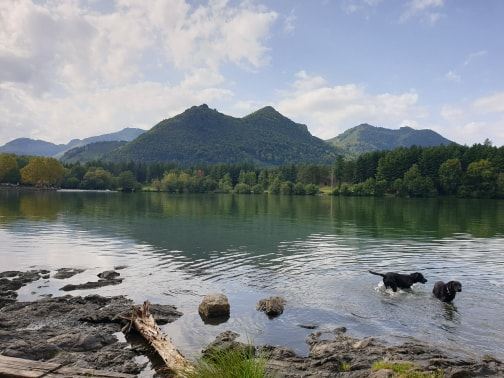 Doggos in Lourdes Lac