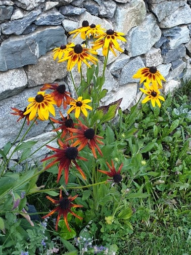 Gavarnie flowers